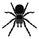 Icona della siluetta del ragno per l'illustrazione di Halloween Illustrazione di Stock