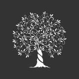 Icona della siluetta di olivo isolata su fondo scuro Fotografia Stock