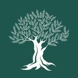 Icona della siluetta di olivo isolata su fondo verde Fotografia Stock Libera da Diritti