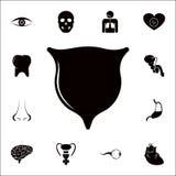 Icona della vescica L'insieme dettagliato dell'essere umano parte le icone Segno premio di progettazione grafica di qualità Una d illustrazione di stock