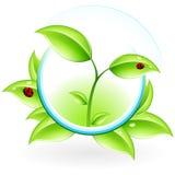 Icona di ECO Fotografia Stock