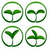 Icona di ecologia delle piante Immagini Stock