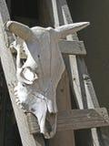Icona di sud-ovest Fotografie Stock Libere da Diritti