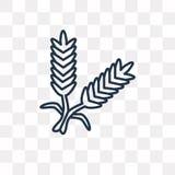 Icona di vettore del cereale isolata su fondo trasparente, Ce lineare illustrazione vettoriale
