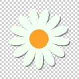 Icona di vettore del fiore della camomilla nello stile piano Illustrazione o della margherita illustrazione di stock