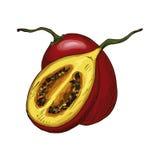 Icona isolata schizzo di vettore della frutta del tamarillo illustrazione di stock