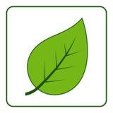Icona verde della foglia Fotografia Stock Libera da Diritti