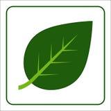 Icona verde della foglia Immagine Stock
