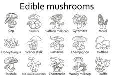 Icone commestibili dei funghi messe royalty illustrazione gratis