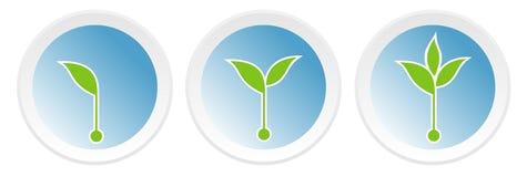 Icone con i germogli crescenti Fotografia Stock