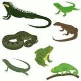 Icone decorative dell'insieme degli anfibi e dei rettili Fotografia Stock Libera da Diritti