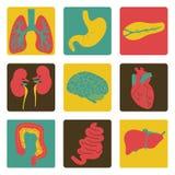 Icone degli organi interni Fotografia Stock Libera da Diritti