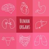 Icone degli organi umani illustrazione di stock