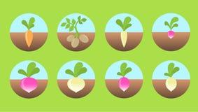 Icone degli ortaggi a radici Immagine Stock Libera da Diritti