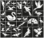 Icone degli uccelli illustrazione di stock