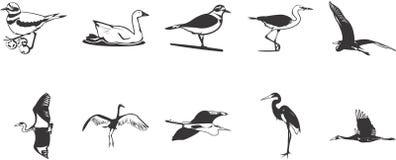 Icone degli uccelli   Fotografie Stock Libere da Diritti
