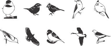 Icone degli uccelli impostate Immagini Stock