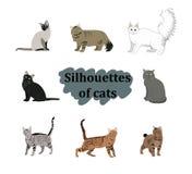 Icone dei gatti della razza di vettore messe Immagini Stock Libere da Diritti