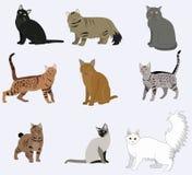 Icone dei gatti della razza di vettore messe Fotografie Stock