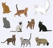 Icone dei gatti della razza di vettore messe Immagini Stock