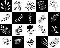 Icone dei quadrati delle piante in bianco e nero Immagine Stock