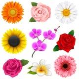 Icone del fiore di vettore Fotografie Stock Libere da Diritti
