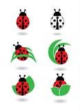 Icone della coccinella messe Immagine Stock