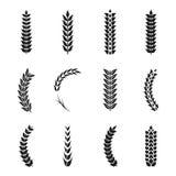 Icone delle orecchie del grano di vettore Grani del grano e dell'avena illustrazione di stock