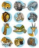 Icone impostate con gli animali africani Immagine Stock