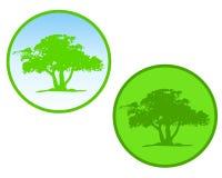 Icone o marchi verdi del cerchio dell'albero Fotografie Stock Libere da Diritti