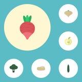 Icone piane Jonagold, rapa, Praties ed altri elementi di vettore L'insieme di Berry Flat Icons Symbols Also include Jonagold Fotografia Stock Libera da Diritti