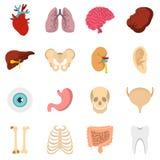 Icone piane messe degli organi umani Fotografia Stock