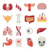 Icone piane umane di vettore degli organi interni Fotografia Stock