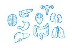 Icone pulite e taglienti del profilo circa anatomia umana Fotografia Stock Libera da Diritti