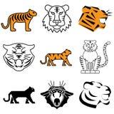 Icone selvagge della tigre Fotografie Stock Libere da Diritti