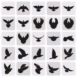 Icone semplici volanti del piccione nero della colomba messe Fotografie Stock