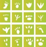 Icone verdi della stampa del piede Fotografie Stock Libere da Diritti