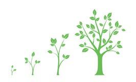 Icone verdi - fasi di crescita dell'albero su fondo bianco Fotografia Stock