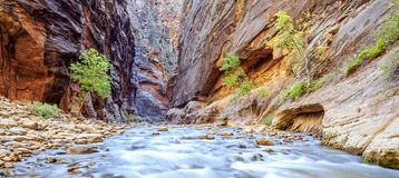 The iconic bend of the Virgin River Stock Photos