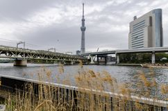 Iconic buildings as seen from Sumida Park stock photo