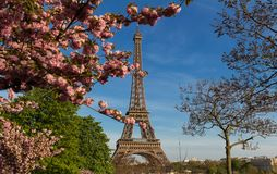 The iconic Eiffel Tower in Paris on a sunny spring day behind cherry blossoms