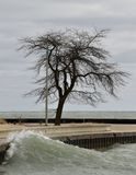 The Iconic Lone Tree. This is a early Spring picture of the iconic Lone Tree on a stormy day, located at the base of the Breakwater at North Avenue Beach on Lake Stock Photo