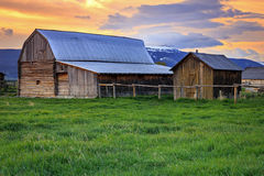 Iconic Mormon Row Barns with sunrise sky. Royalty Free Stock Photos