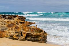 The iconic shipwreck of the SS Ferret and Ethel had the sand unc. Overed by a large storm on Ethel Beach, Yorke Peninsula, South Australia, Australia Royalty Free Stock Photo