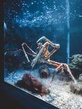 A giant crab in an aquarium in Malaga stock photos