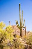 Iconic Southwest Scene Stock Photography