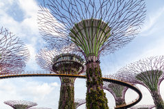 Iconic Supertree Grove at Gardens by the Bay Royalty Free Stock Image