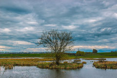 Iconic tree at river in sunset. Spring Royalty Free Stock Photo