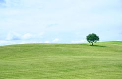 Iconic Tuscany fields , Italy Stock Images