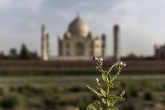 Iconic view of Taj Mahal one of the World Wonders, Agra, India Royalty Free Stock Photography